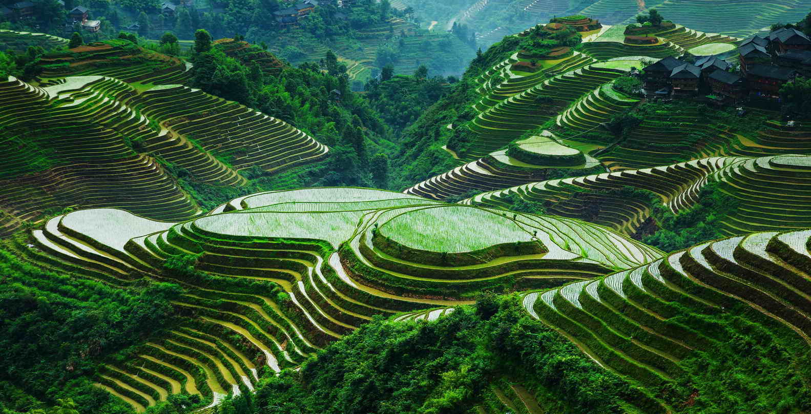 Longsheng-rice-terraces-Yangshuo-Mountain-Retreat-tours